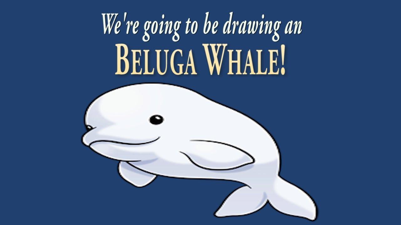 how to draw a cute little beluga whale easy drawing artninja