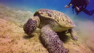 Immersione Sharm Abu Dabbab giugno 2017