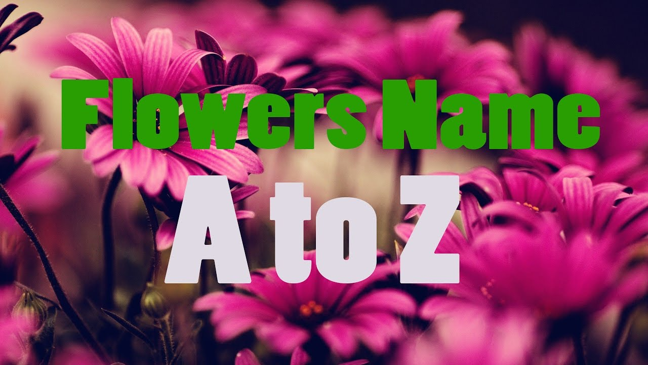 Flowers Names For Kids A To Z Bdkids Youtube