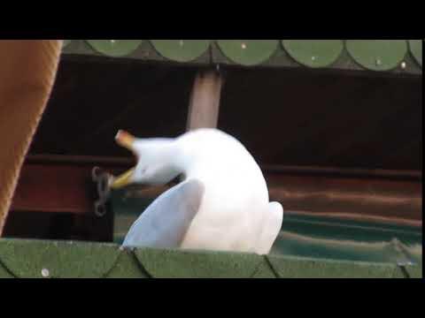 SeaGull ft Gorillaz - Feel Good Inc
