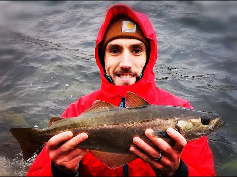 Sea Fishing - Pollock, A Cod And Feeding The Future . . .