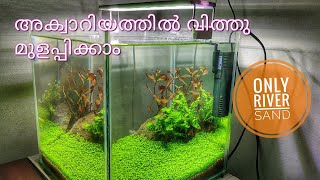 Aquarium carpet seed growth in river sand malayalam