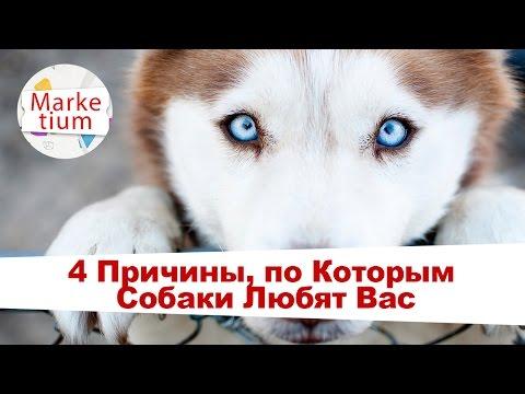 Вопрос: Любит ли вас ваша собака?