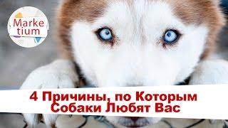 4 Причины, по Которым Собаки Любят Вас!
