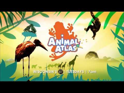 Animal Atlas | 7am Tuesdays | :15