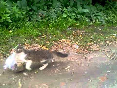 Кот тащит мусор