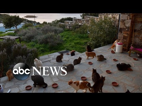 Job post for living at cat sanctuary on Greek island flooded with 35,000 applications