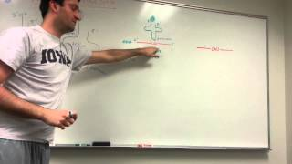 tRNA and Protein Synthesis: Made simple!