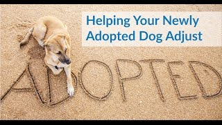 Tips If You Just Adopted a Dog