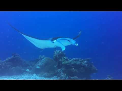 Palau Dive Trip   Jan 2017
