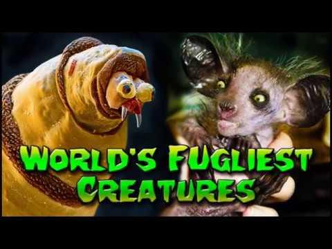 World's Ugliest Animals, Ever!