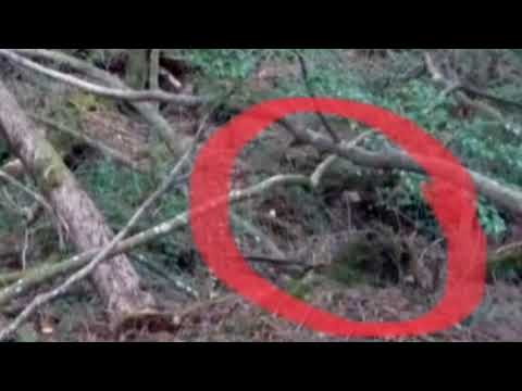 Interesting images from Aokigahara