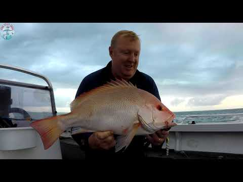 Fishing Shallow Reefs In Hervey Bay - Jigging Up Dinner