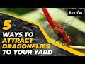 5 Ways To Attract Dragonflies To Your Yard - Nature-Friendly Gardening Hack