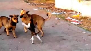 Супер кот против двух собак.