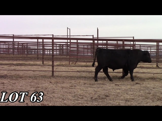 Mead Angus Farms Lot 63