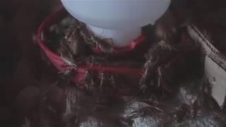 จิ้งหรีด เวียงจันท์ ลาว ຈີ້ງຫລີດ ວຽງຈັນ ລາວ Maddox Farm / Facebook /Silk Maddox