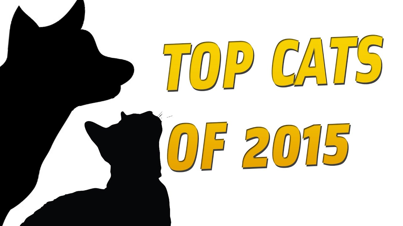 CAT GAMES - TOP CATS OF 2015
