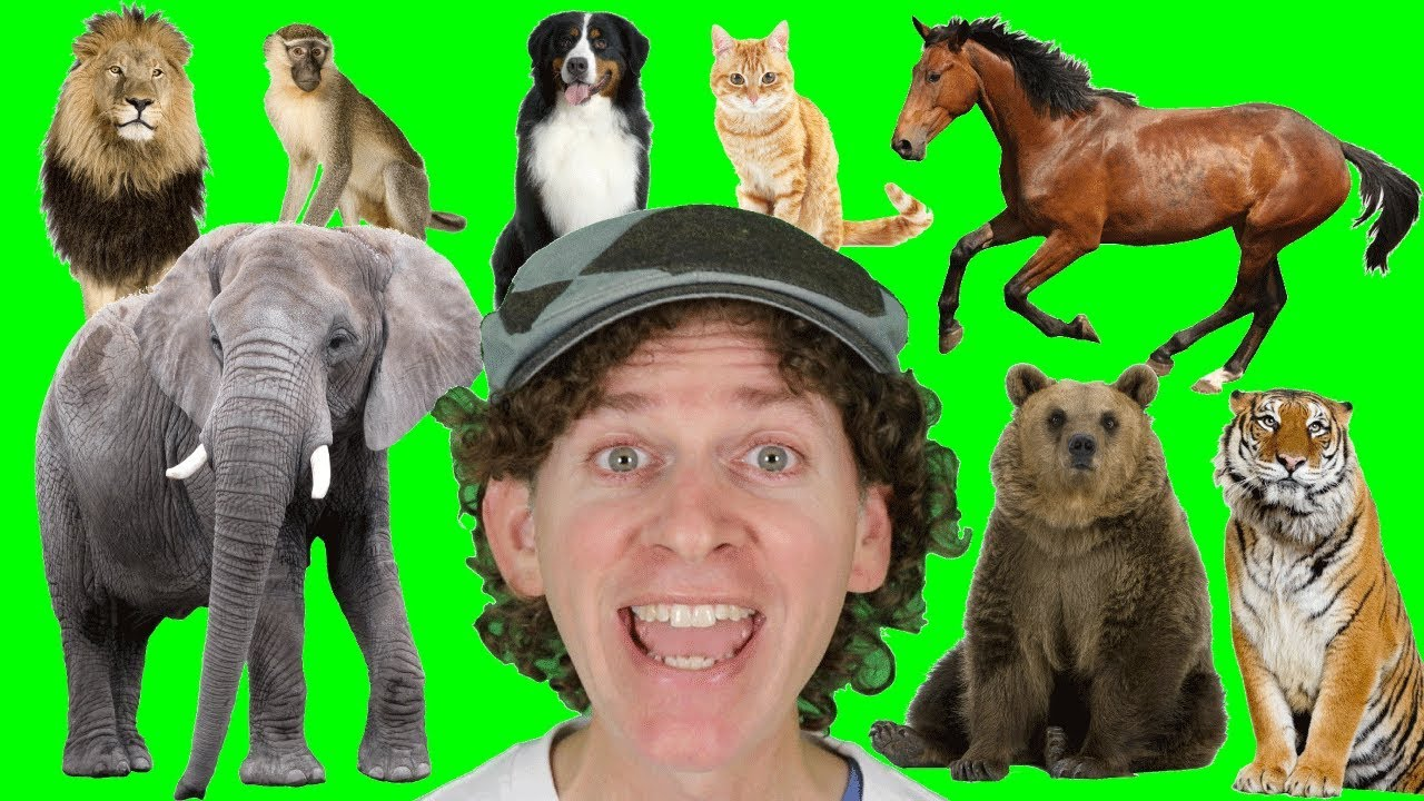 A to Z Alphabet Animals Chant with Matt   Learn Animals Names   Alphabet for Kids