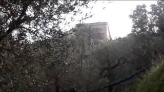 Olio, A Sorrento tra gli olivi secolari