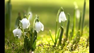 ''Не видел ту Весну'' Авторская песня. Играет и поёт Павел Сивков (баян)