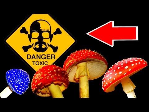 Как выглядит ядовитые грибы