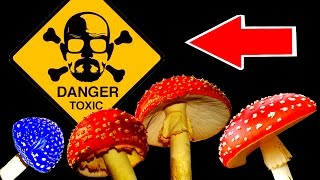 ТОП 15 опасных для человека грибов (ядовитые грибы)