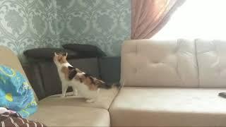 В углу кошка что-то видит и резко отпрыгивает.