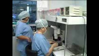 Fertility Institute of Hawaii – Video Tour of the Most Advanced Fertility Center in Hawaii