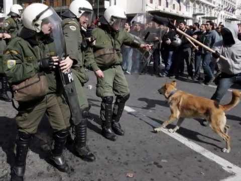 LOUKANIKOS-THE GREEK RIOT DOG...