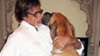 Bollywood Stars and Their Pets - Latest Bollywood News