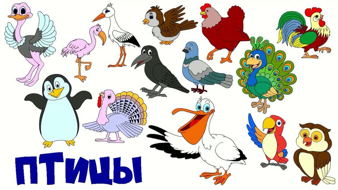 Мультик для малышей про птиц. Название птиц и их звуки