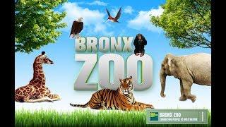 Экскурсия в самый крупный зоопарк Нью-Йорка - BRONX ZOO