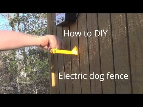 How To Stop Dogs Digging Under Your Fence Gate Or Garden