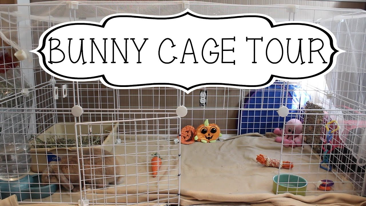 Bunny Cage Tour Youtube
