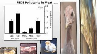 Bílkoviny, puberta a znečišťující látky