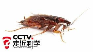 走近科学 家有蟑螂 走近科学 20101117