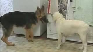 Reading Play Behavior 4 - Training The Companion Dog 1  Socialization & Training