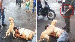 ¡Mira lo que los Perros Hacen por los Humanos! ¡Esto Derretirá tu Corazón!
