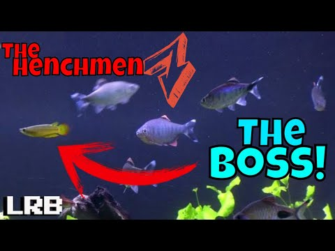 DEEPER Look Into Fishocracy The Saga Of My Tropical Freshwater Fish Aquarium Ep 5