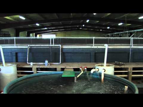 1 - Indoor Fish Production.mov