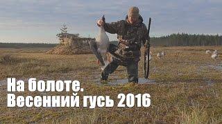 Охота гусей на болотах 2016