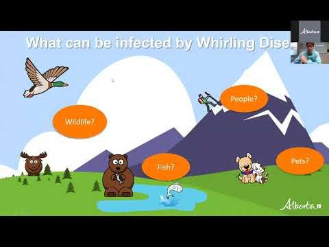 Whirling Disease In Alberta