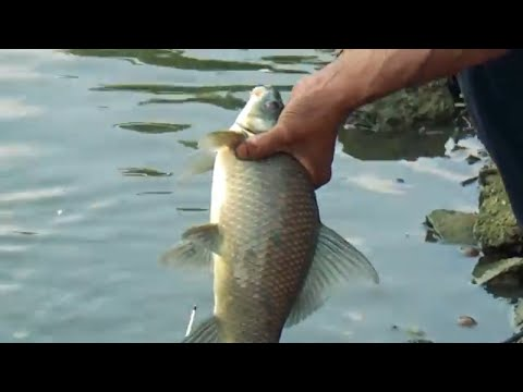 Best Trial Fishing Videos By Fish Watching