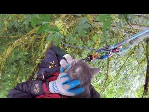 Two cats rescued from SAME tree by Canopy Cat Rescue