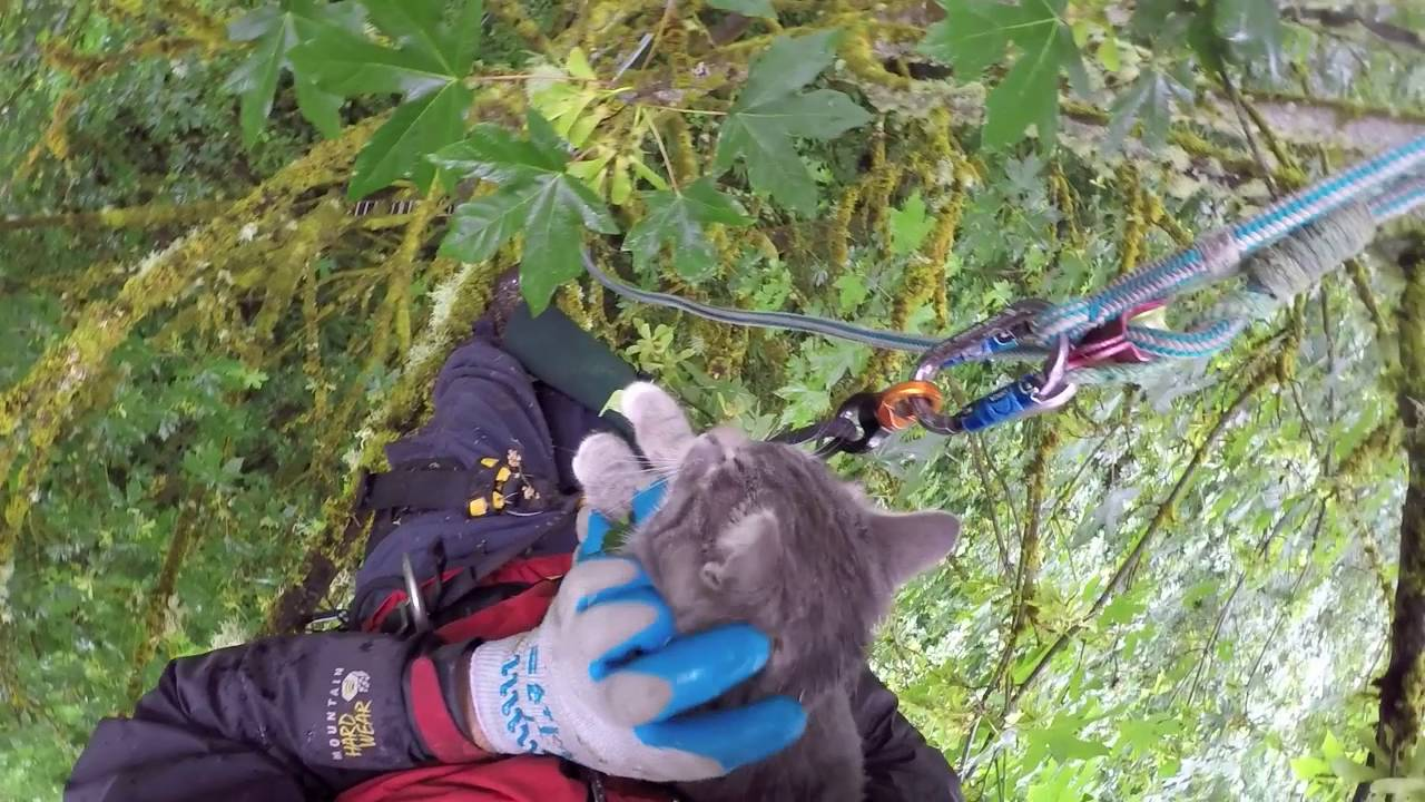 two cats rescued from same tree by canopy cat rescue youtube
