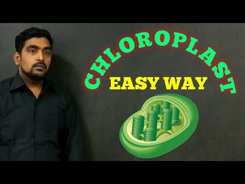 HOW TO DRAW CHLOROPLAST (STRUCTURE IN EASY WAY )