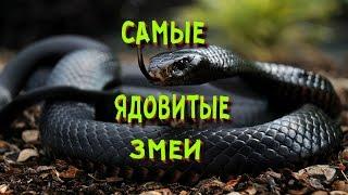 Ядовитые змеи мира | смертельно опасные змеи
