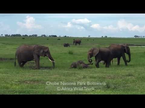 Botswana. Talking about elephant population