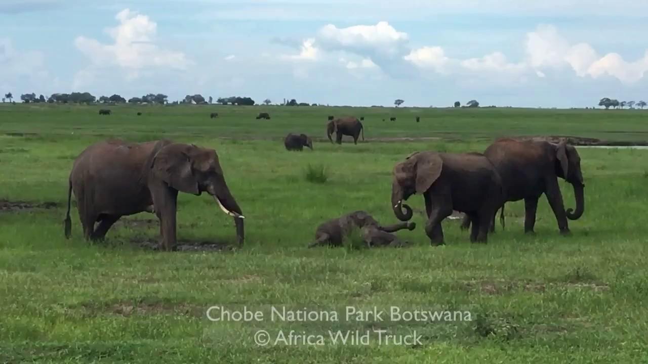 Botswana  Talking about elephant population